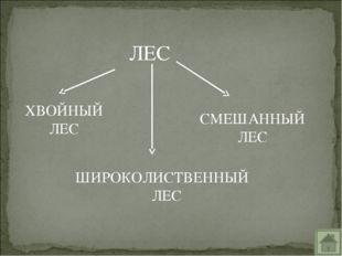 ЛЕС ХВОЙНЫЙ ЛЕС СМЕШАННЫЙ ЛЕС ШИРОКОЛИСТВЕННЫЙ ЛЕС