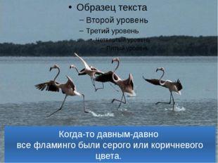 Когда-то давным-давно все фламинго были серого или коричневого цвета.
