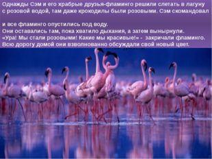 Однажды Сэм и его храбрые друзья-фламинго решили слетать в лагуну с розовой