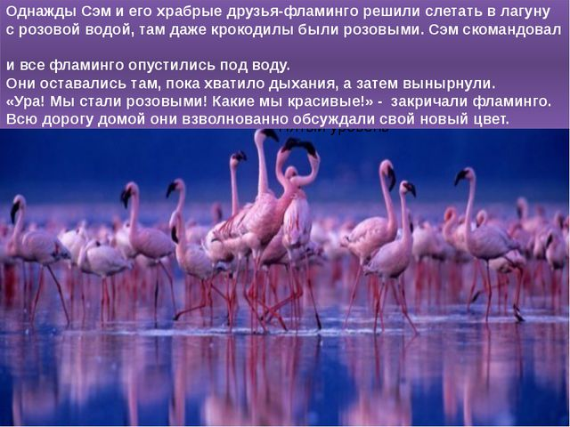 Однажды Сэм и его храбрые друзья-фламинго решили слетать в лагуну с розовой...