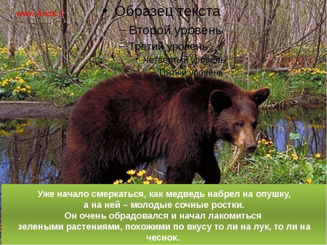 Уже начало смеркаться, как медведь набрел на опушку, а на ней – молодые сочны...