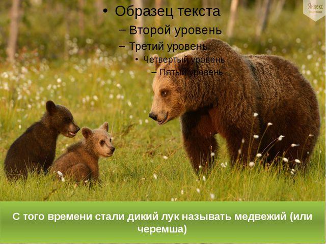 С того времени стали дикий лук называть медвежий (или черемша)