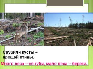 Вырубка леса Срубили кусты – прощай птицы. Много леса – не губи, мало леса –