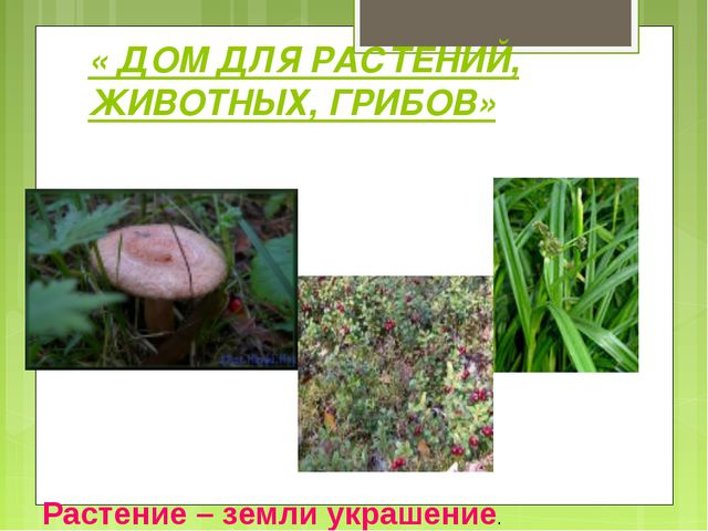« ДОМ ДЛЯ РАСТЕНИЙ, ЖИВОТНЫХ, ГРИБОВ» Растение – земли украшение.