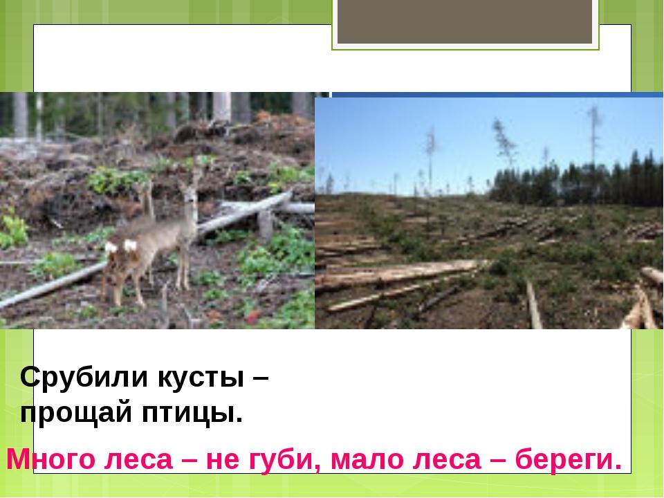 Вырубка леса Срубили кусты – прощай птицы. Много леса – не губи, мало леса –...