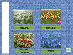 Самым первым люди начали выращивать в своих садах тюльпан Шренка. Цветки тюл