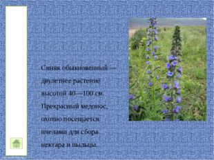 Степь FokinaLida.75@mail.ru