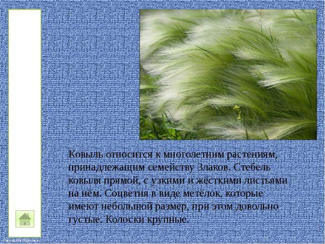 Это «в меру упитанный» степной грызун, которого еще называют байбак. Сурки о...