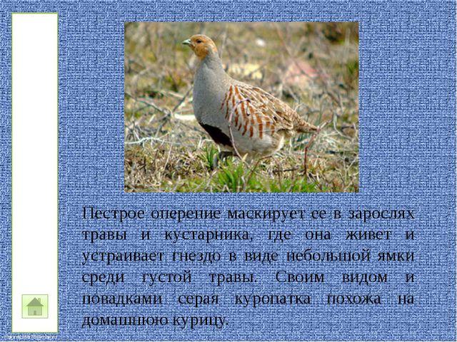Интерактивный плакат составлен учителем начальных классов МБОУ «Подолешенская...