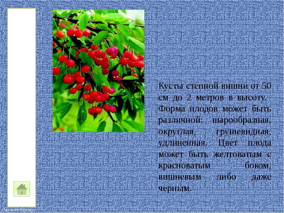 Синяк обыкновенный— двулетнее растение высотой 40—100 см. Прекрасный медоно...