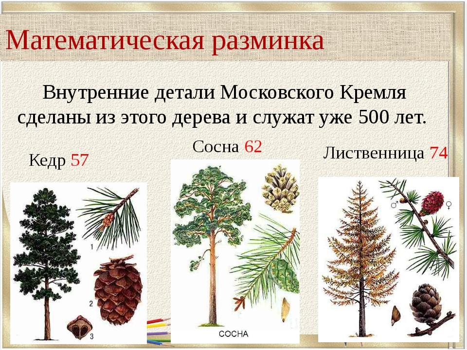Внутренние детали Московского Кремля сделаны из этого дерева и служат уже 500...