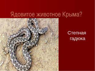 Ядовитое животное Крыма? Степная гадюка