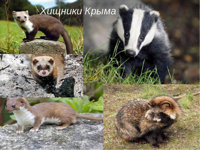 Хищники Крыма