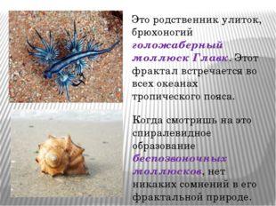 Гимназия № 8 Сочи Еще одним представителем фрактального подводного мира являе