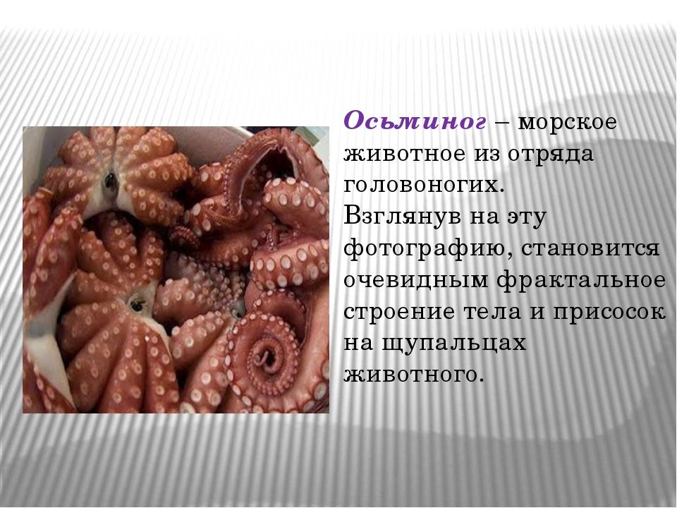Гимназия № 8 Сочи Это родственник улиток, брюхоногий голожаберный моллюск Гла...
