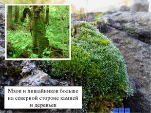 Мхов и лишайников больше на северной стороне камней и деревьев
