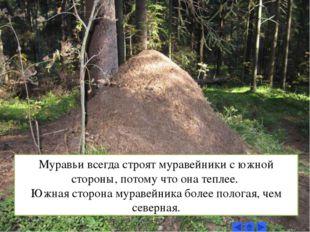 Муравьи всегда строят муравейники с южной стороны, потому что она теплее. Южн