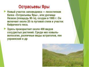 Острасьевы Яры Новый участок заповедника — лесостепная балка «Острасьевы Яры»