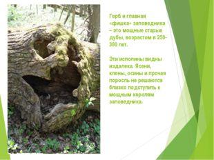 Герб и главная «фишка» заповедника – это мощные старые дубы, возрастом в 250-