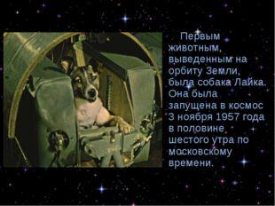 Первым животным, выведенным на орбиту Земли, была собака Лайка. Она была зап