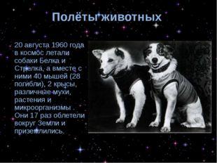 Полёты животных 20 августа 1960 года в космос летали собаки Белка и Стрелка,