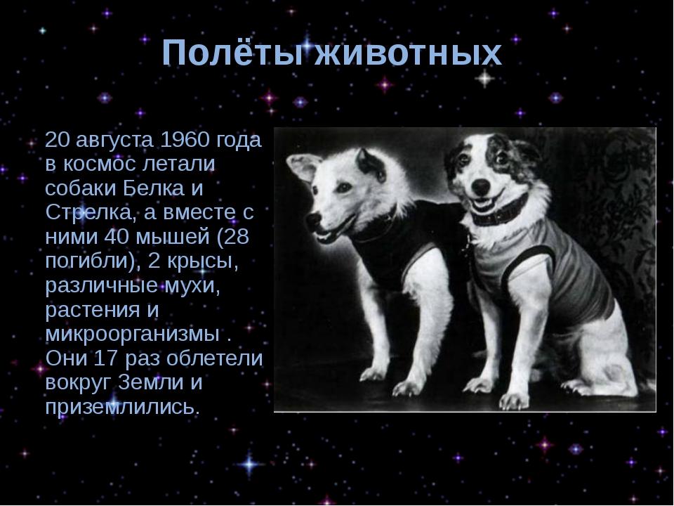 Полёты животных 20 августа 1960 года в космос летали собаки Белка и Стрелка,...