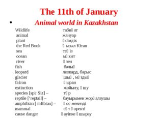 The 11th of January Animal world in Kazakhstan Wildlife табиғат animal жануар