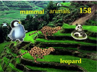 158 animals mammal leopard