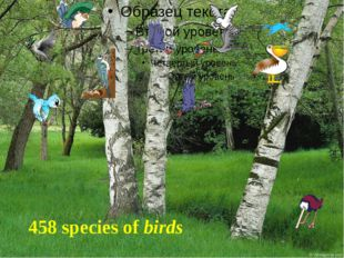458 species of birds