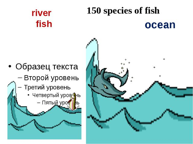 river fish ocean 150 species of fish