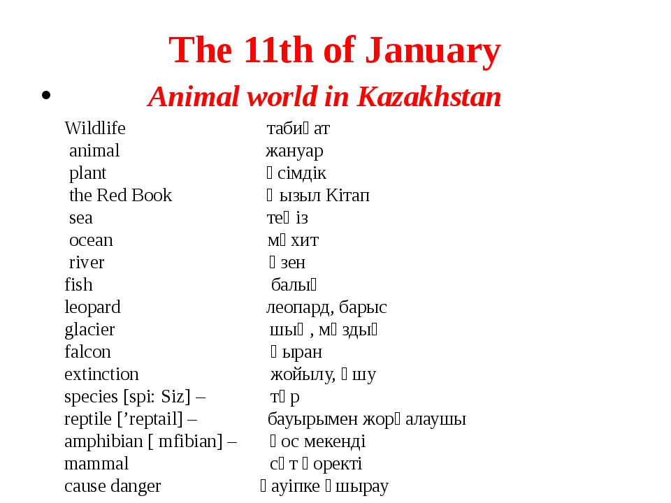 The 11th of January Animal world in Kazakhstan Wildlife табиғат animal жануар...
