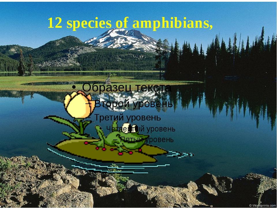 12 species of amphibians,