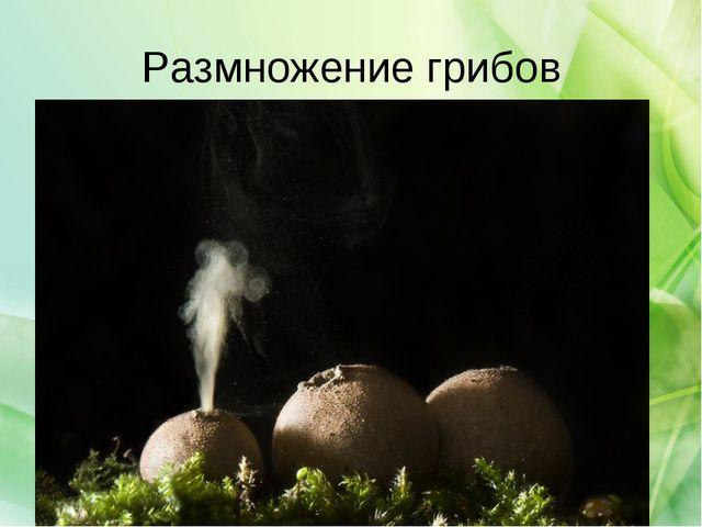 Размножение грибов
