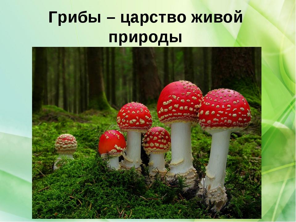 Грибы – царство живой природы
