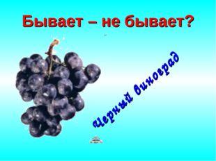 Бывает – не бывает? Черный виноград