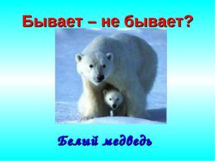 Бывает – не бывает? Белый медведь