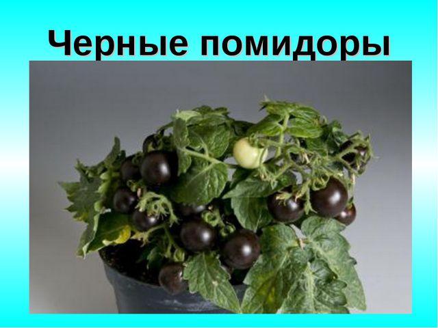 Черные помидоры