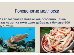 Головоногие моллюски Из головоногих моллюсков особенно ценны кальмары, их еже