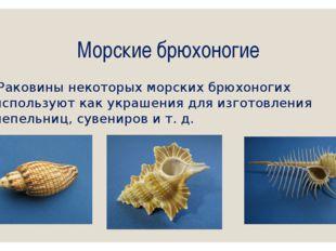 Морские брюхоногие Раковины некоторых морских брюхоногих используют как украш