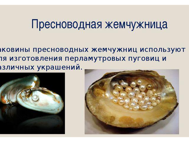 Пресноводная жемчужница Раковины пресноводных жемчужниц используют для изгото...