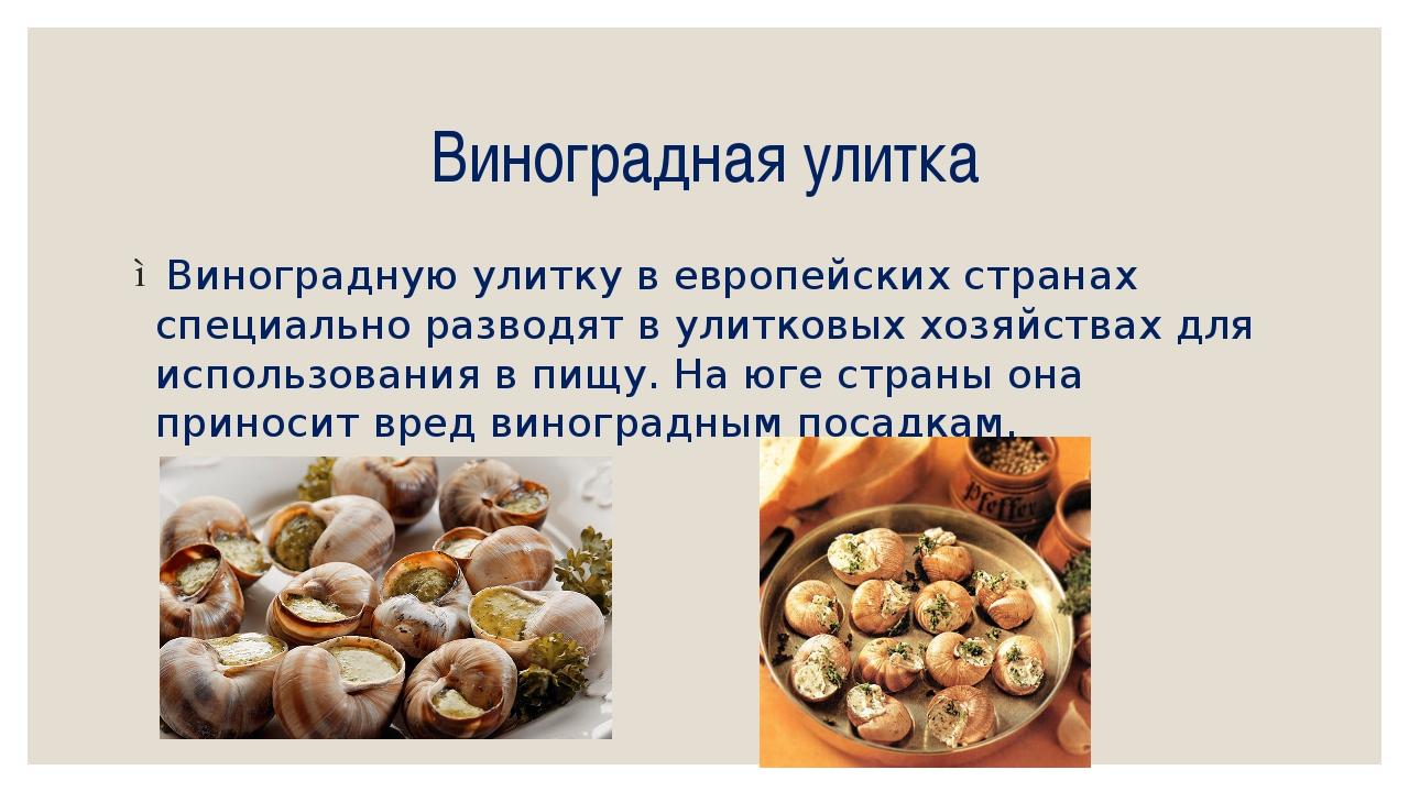 Виноградная улитка Виноградную улитку в европейских странах специально развод...