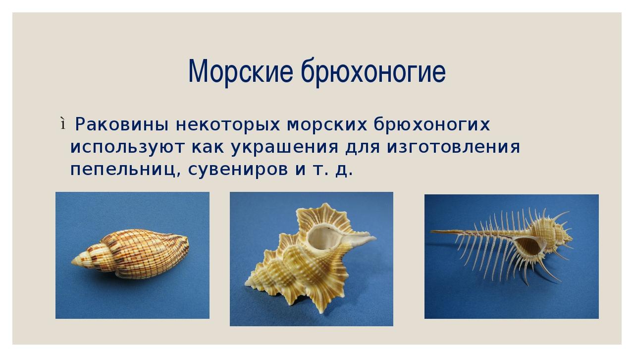 Морские брюхоногие Раковины некоторых морских брюхоногих используют как украш...