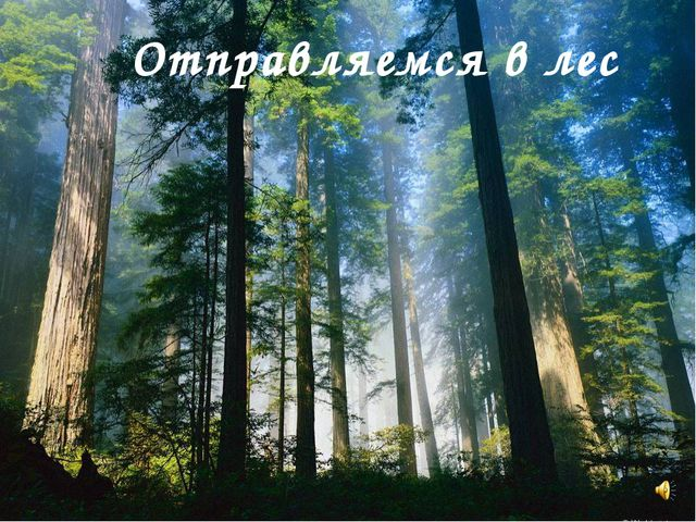 Отправляемся в лес