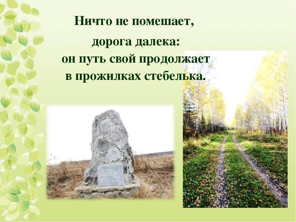 Ничто не помешает, дорога далека: он путь свой продолжает в прожилках стебел...