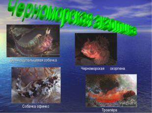 Длиннощупальцевая собачка Троепёра Черноморская скорпена Собачка сфинкс