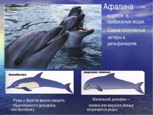Афалина водится – прибрежных водах. в Самые популярные актёры в дельфинариях.