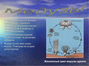 В Чёрном море водится два вида крупных медуз - аурелия и корнерот. Купол корн