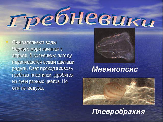 Они заполняют воды Чёрного моря начиная с апреля. В солнечную погоду перелива...