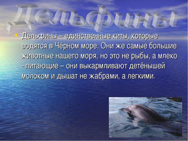 Дельфины – единственные киты, которые водятся в Чёрном море. Они же самые бол...