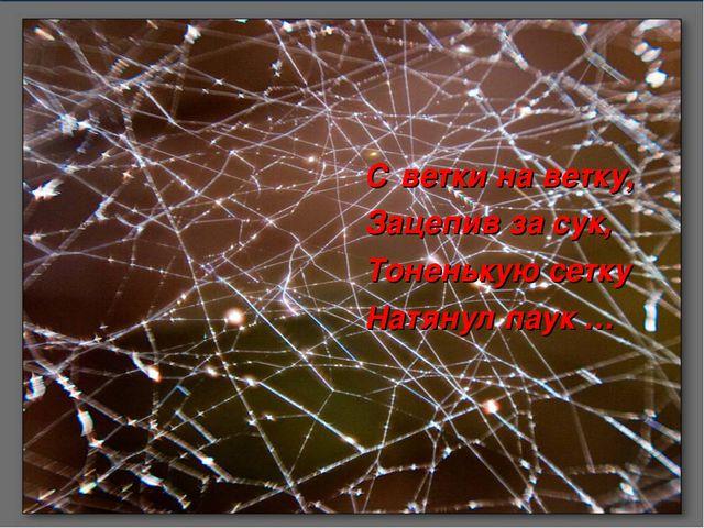С ветки на ветку, Зацепив за сук, Тоненькую сетку Натянул паук …